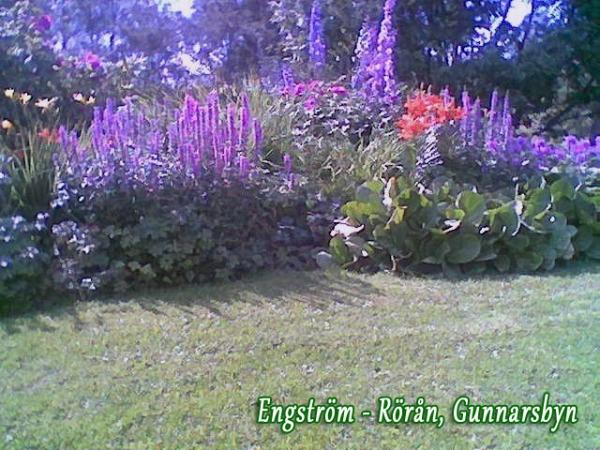 2012_Oppentradgard_4. Gudrun (1)