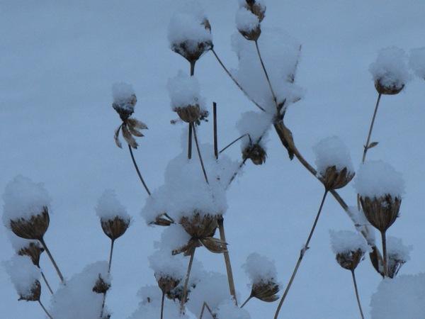 Vinter_IM1