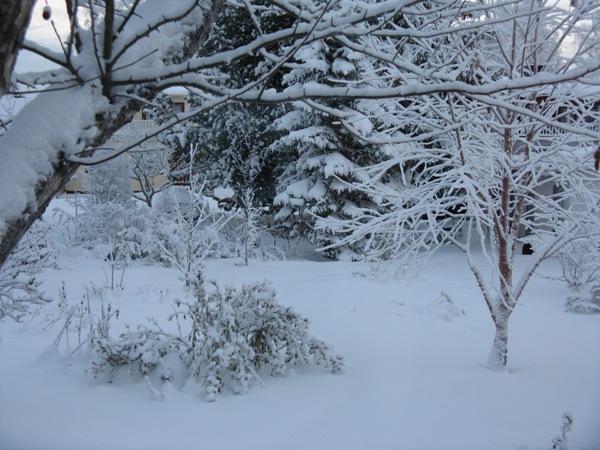Vinter_IM3
